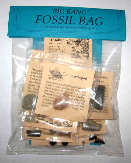 Instant Fossil Collection For Sale