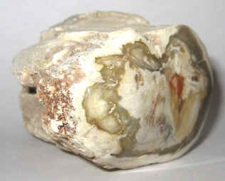 Petrified Wood Fossil Specimens For Sale